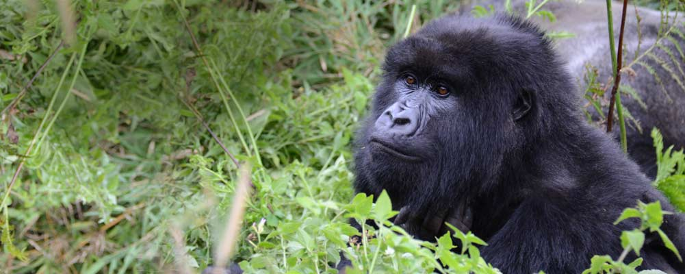 Access 2 Rwanda Safari and Tours